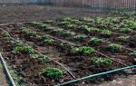 Поливка огорода своими руками